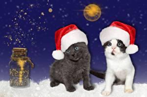 Fotos Neujahr Katzen Einweckglas Mütze Kätzchen ein Tier