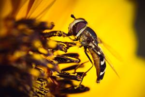 Wallpaper Closeup Macro Insects Flies Animals