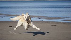 Images Dogs White Funny Running
