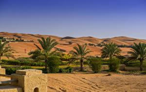 Bakgrunnsbilder De forente arabiske emirater Ørken Åser Palmer Abu Dhabi Natur