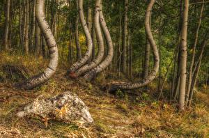 Bilder Wald Steine Baumstamm HDRI Birken