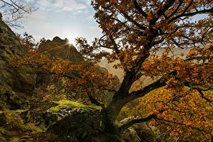 Fotos Deutschland Herbst Stein Bäume Laubmoose Lichtstrahl Hessen