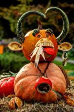 Hintergrundbilder Deutschland Kreativ Kürbisse Horn Unscharfer Hintergrund Ludwigsburg Pumpkin Festival