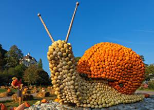 Bilder Deutschland Kürbisse Schnecken Design Ludwigsburg Pumpkin Festival
