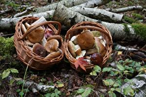 Photo Mushrooms nature Penny bun Wicker basket Nature