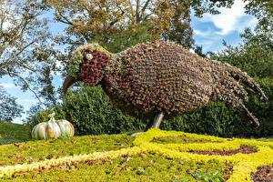Hintergrundbilder Park Vogel Herbst Kürbisse England Design Waddesdon Manor park Natur