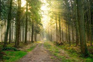 Hintergrundbilder Straße Wald Lichtstrahl Bäume