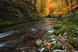 Hintergrundbilder Stein Flusse Herbst Laubmoose Blatt Natur