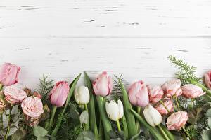 Bilder Tulpen Rose Bretter Rosa Farbe Blumen