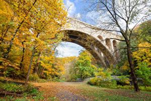 Hintergrundbilder Vereinigte Staaten Park Herbst Brücke Bäume Blattwerk Wissahickon Valley Park