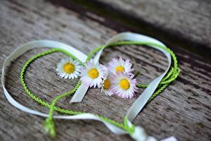 Hintergrundbilder Valentinstag Gänseblümchen Band Herz Blumen