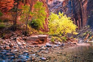 Fotos Zion-Nationalpark USA Steine Felsen Canyons Bach Utah