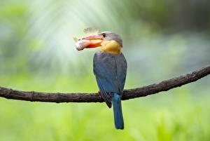 Images Birds Fish Common Kingfisher Branches Beak Hunt Animals