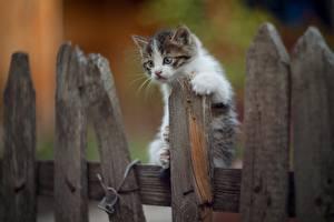 Fotos Hauskatze Kätzchen Zaun Aus Holz ein Tier