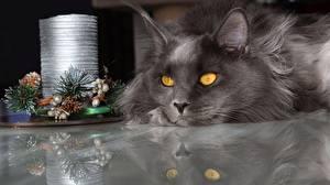 Fotos Katze Mancoon Neujahr Starren Grau Tiere