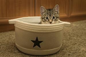 Hintergrundbilder Katze Kleine Sterne Katzenjunges Kopf Blick ein Tier