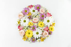 Photo Chrysanthemums Alstroemeria Roses Camomiles White background Design flower