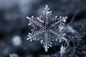 Fotos Hautnah Makro Schneeflocken