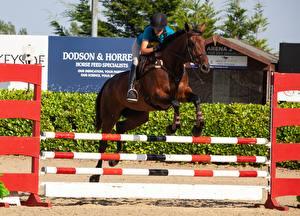 Hintergrundbilder Pferdesport Hauspferd Sprung Sport