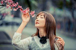Picture Flowering trees Asiatic Bokeh Branches Brown haired Cherry blossom female