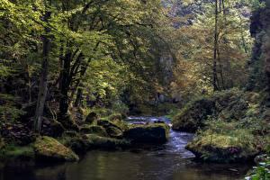 Images Forest River Stone Czech Republic Trees Edmundsklamm, river Kamnitz Nature