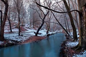 Bilder Wälder Flusse Winter Bäume Schnee Nebel Natur