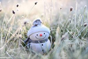 Fotos & Bilder Gras Schneemänner Mütze Schal Bokeh Blumen