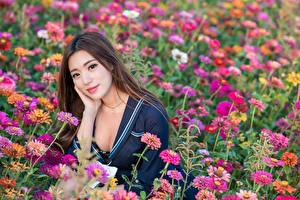 Fotos & Bilder Grünland Asiatische Haar Braunhaarige Süß Blick Mädchens