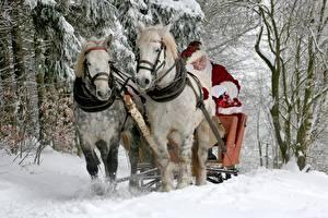 Bilder Pferde Neujahr Schlitten Weihnachtsmann