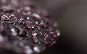 Wallpapers Macro photography Closeup Foliage Drops Nature