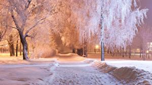Fotos Parks Winter Nacht Bäume Schnee Städte