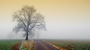 Wallpapers Roads Fields Trees Fog Nature