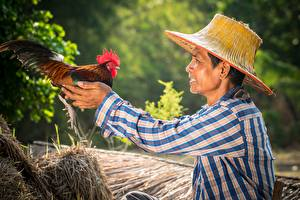 Hintergrundbilder Hahn Asiaten Vogel Mann Der Hut Hand ein Tier