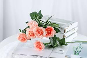 Fotos Rosen Tisch Zeitschrift Rosa Farbe Blüte