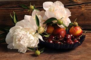Bilder Stillleben Pfingstrosen Beere Kirsche Blütenknospe