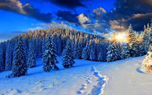 Papel de Parede Desktop Pôr do sol Invierno Floresta Neve Raios de luz Picea Naturaleza