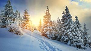 Papel de Parede Desktop Pôr do sol Invierno Raios de luz Picea Trilha Neve Naturaleza