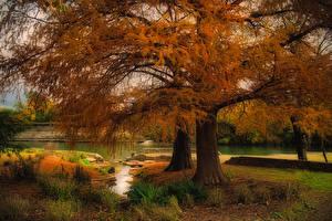 Hintergrundbilder Vereinigte Staaten Herbst Flusse Texas Bäume Austin