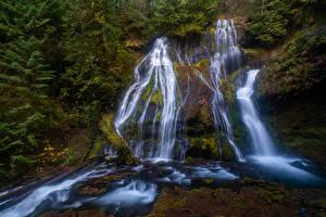 Bilder Vereinigte Staaten Wasserfall Felsen Laubmoose Panther Creek Falls Gifford Pinchot National Forest