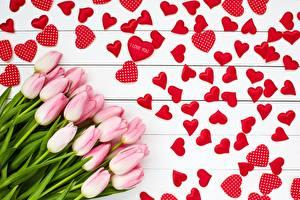 Bilder Valentinstag Tulpen Herz Rosa Farbe Blumen