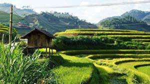 Fotos Vietnam Felder Hügel Sapa Natur