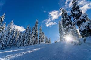 Papel de Parede Desktop Invierno Neve Picea Raios de luz Naturaleza