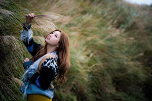 Fotos & Bilder Asiatische Bokeh Pose Sweatshirt Braunhaarige Mädchens