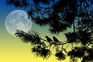 Fotos Vogel Vektorgrafik Nacht Ast Silhouette Mond