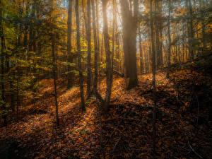 Fotos Kanada Herbst Wald Bäume Blatt Copeland forest near Barrie Natur