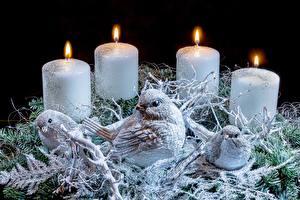 Fotos Kerzen Feuer Vogel Neujahr Nest