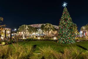 Fotos Neujahr Vereinigte Staaten Gebäude Kalifornien Weihnachtsbaum Rasen Nacht Long Beach Städte