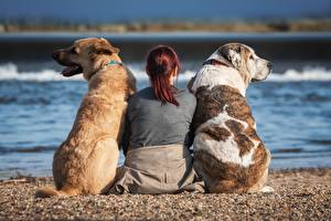 Picture Dog Three 3 Sit Back view Human back Beaches Redhead girl animal