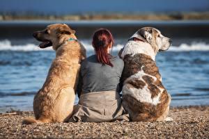 Fotos Hund Drei 3 Sitzt Hinten Rücken Strände Rotschopf ein Tier