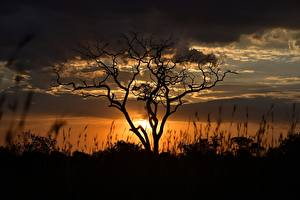 Fotos Abend Morgendämmerung und Sonnenuntergang Wolke Bäume Ast Silhouetten Tanzania Natur
